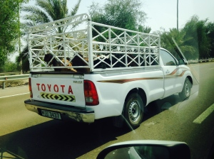 Goats being trucked on the highway near Sharjah.